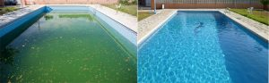 Si algas aparecen el alguicida es la solución